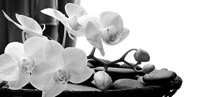 cropped-Bamboo_Orchid_Bkgd2.jpg
